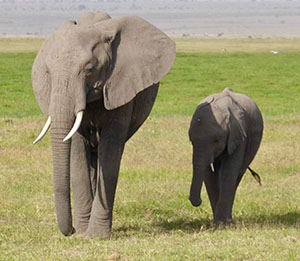 Elephant and baby in Amboseli National Park