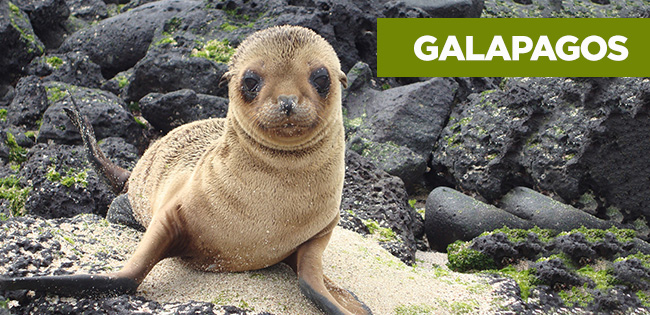 Galapagos Islands Expedition Owner Adventures
