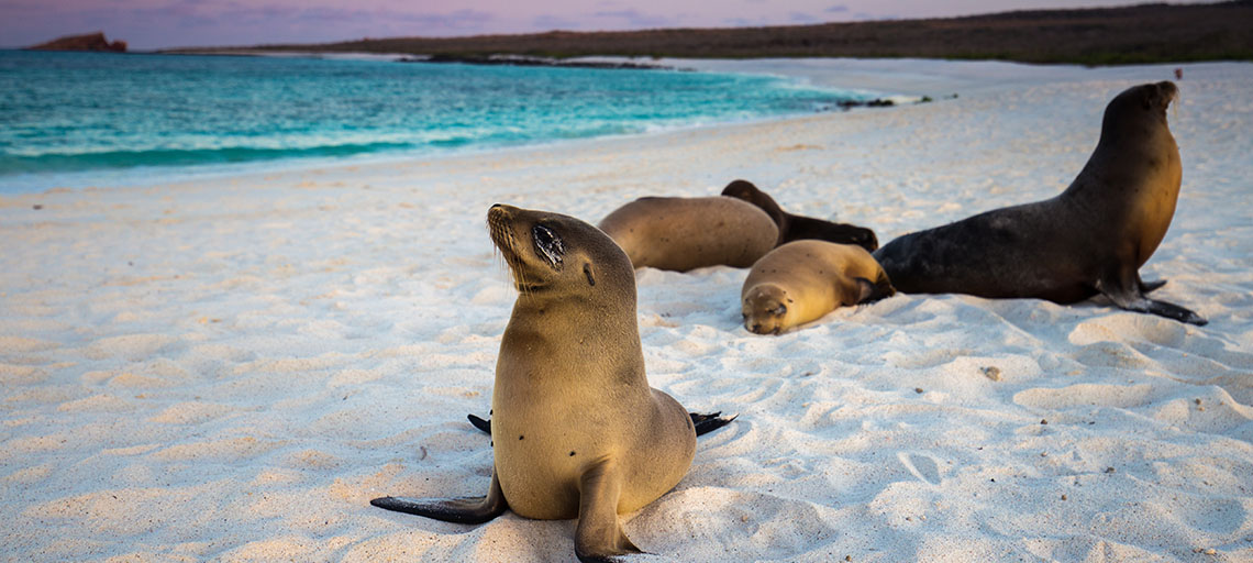 Galapagos Islands Sea Lions on beach