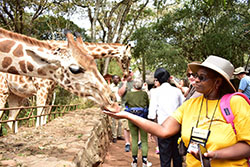 Owner feeding giraffe at Nairobi Giraffe Center.