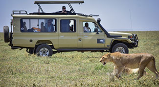 Lion near jeep in Serengeti National Park