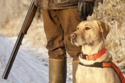 Pheasant hunter and dog