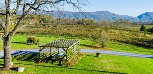 Top 5 Vineyards and Wineries in Virginia's Shenandoah Valley